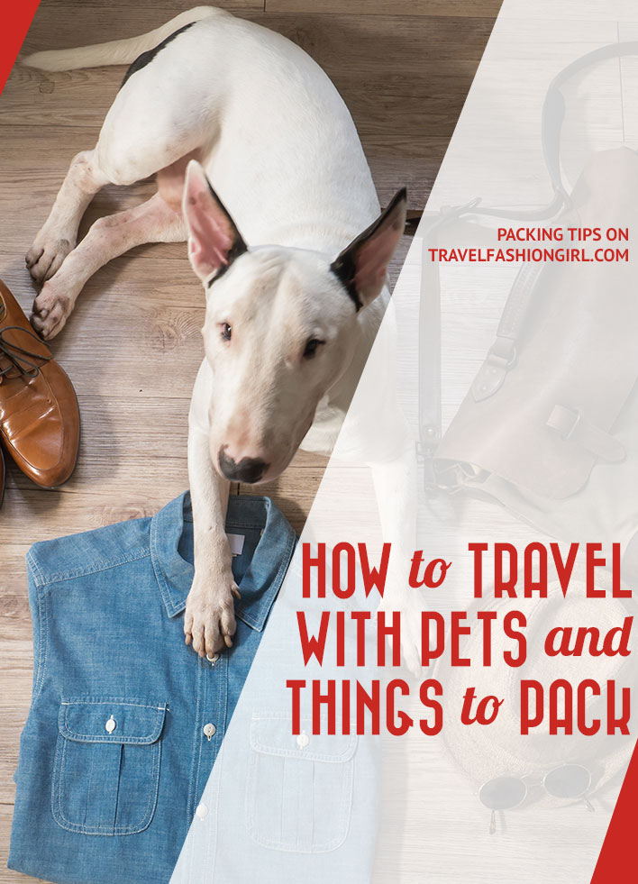 how-to-travel-with-pets-and-things-to-pack